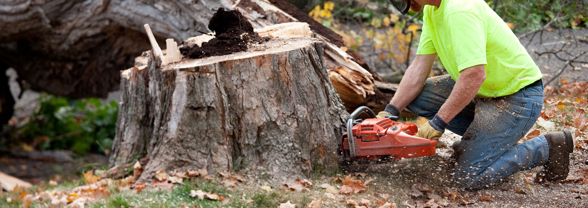 chips tree service inc - newtown square firewood for sale